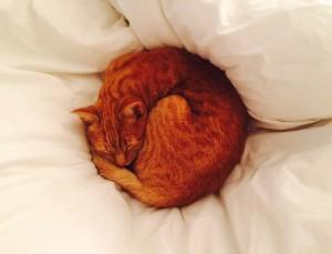 catcircle