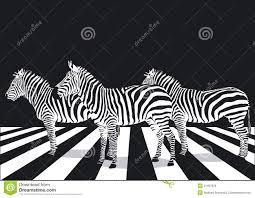 zebra3images (1)