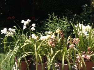 orchids september