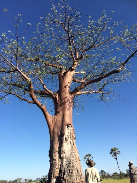 baobabinsunlight