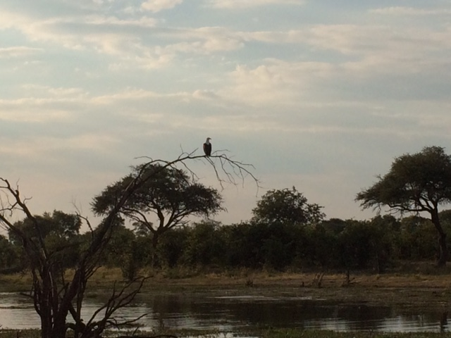 sunset fish eagle